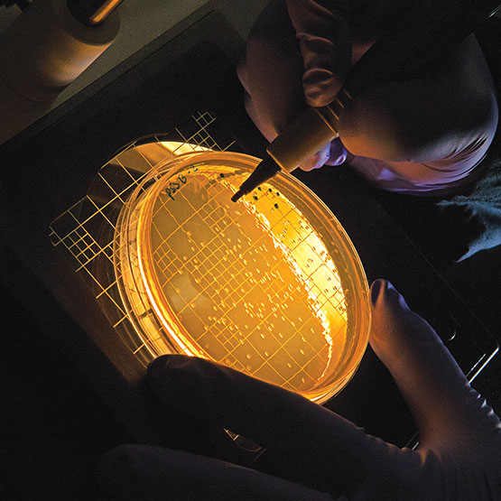 a laboratory dish glowing yellow with a gloved hand using a stylus to touch it.