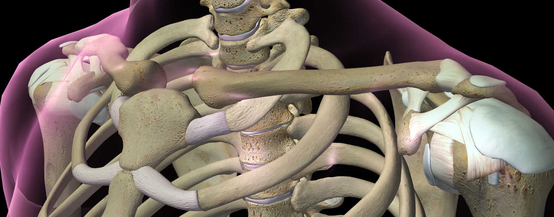 Go to Bone & Biomechanics
