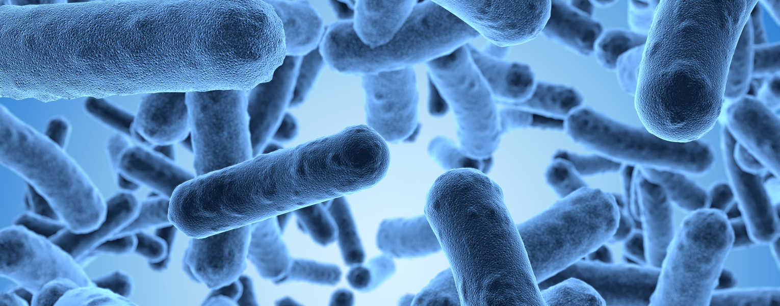 Go to Antimicrobial Product Development, Characterization & Testing