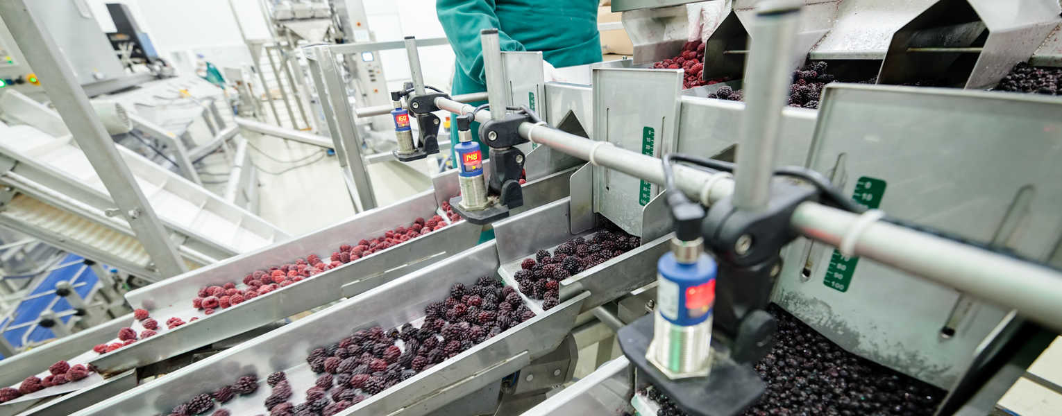 Go to Food Processing Services