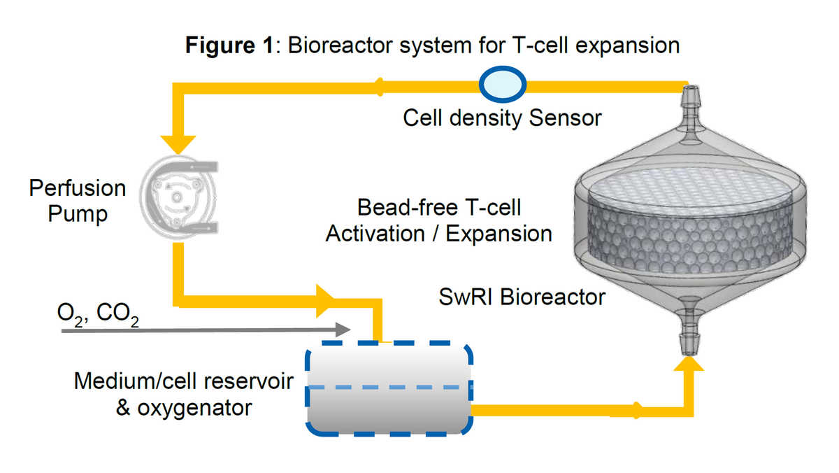 T-cell manufacturing system