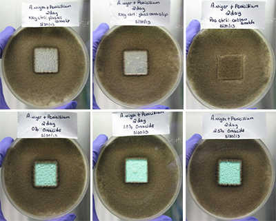 Series of 6 petri dishes showing the progression of biocide paint testing on an aircraft