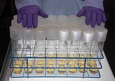Purple-gloved hands resting on top of large test tubes in a rack