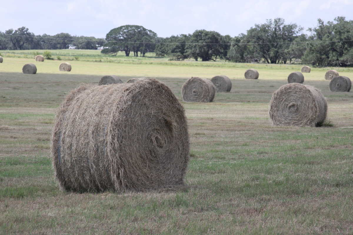 hay bales scattered across a hay field