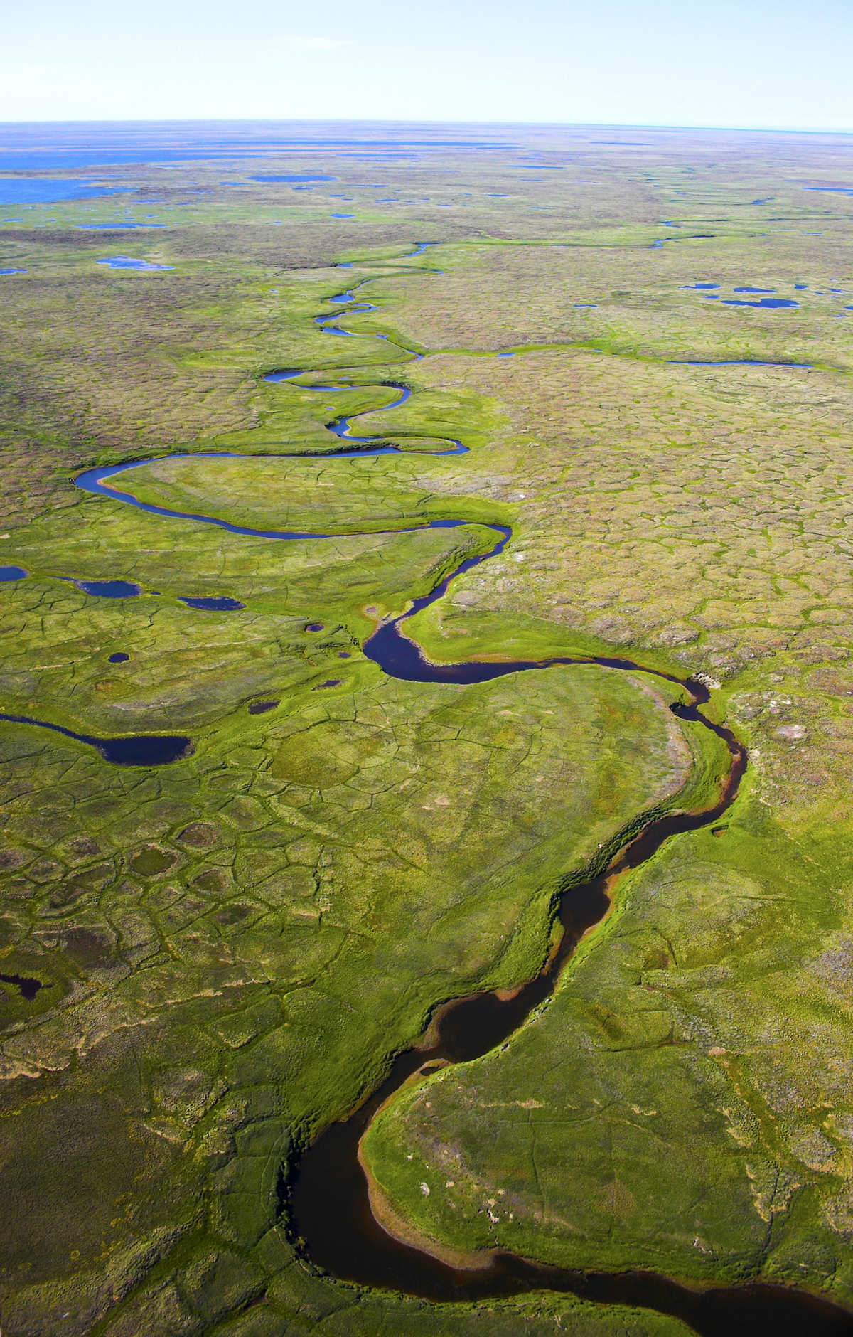Arctic tundra showing ice wedge degradation