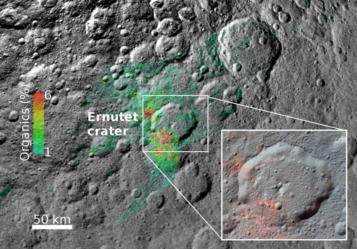 Organic Concentrations on Ceres