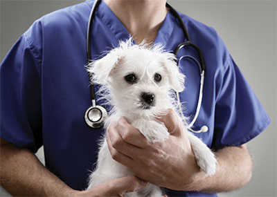 Veterinarian holding a white dog